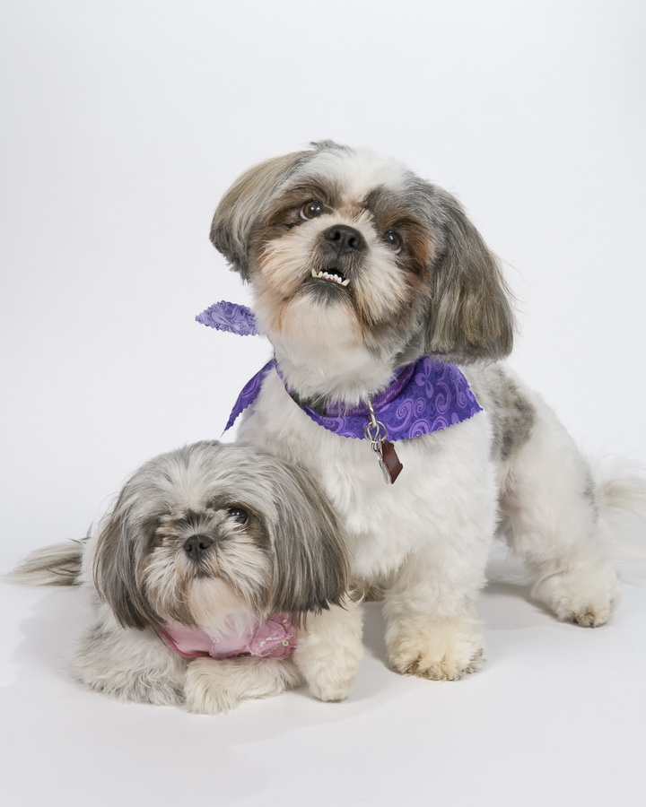 Pampered Pedigrees Pet Grooming